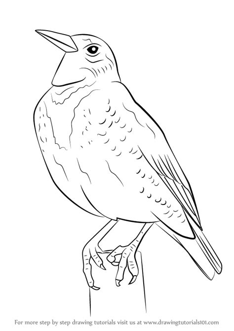 learn how to draw a western meadowlark birds step by