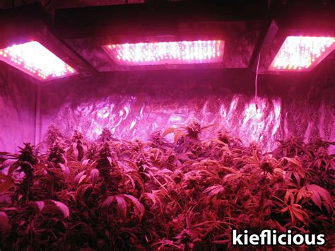 black led grow light grow light breakdown heat cost yields grow easy