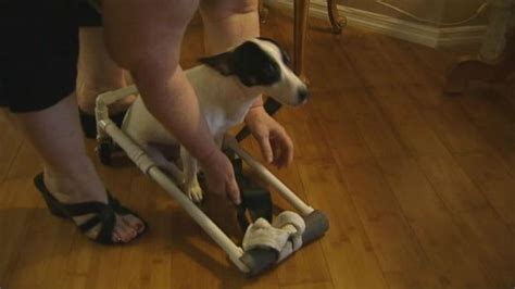 hind legs suddenly paralyzed home depot employees build wheelchair for paralyzed