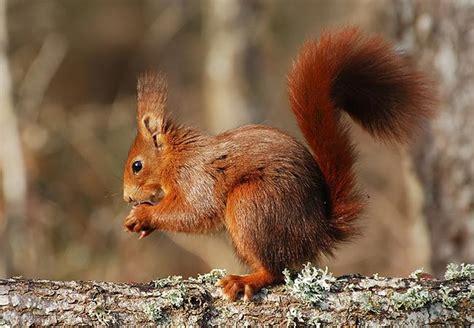 imagenes relajantes de animales fotos de animales omn 237 voros animales omn 237 voros