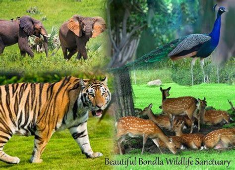 Plants For Formal Gardens - bondla wildlife sanctuary goa india