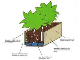 vaso per idrocoltura piante coltivate in idrocoltura