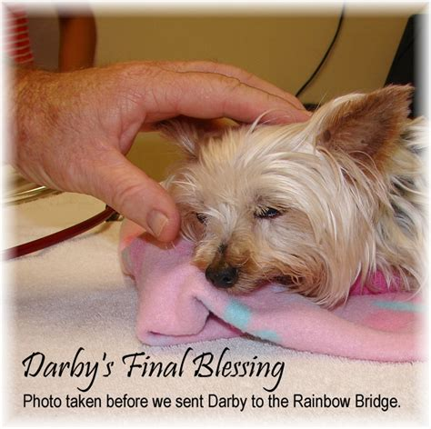 yorkie rescue florida teacup yorkie rescue florida 2015 personal