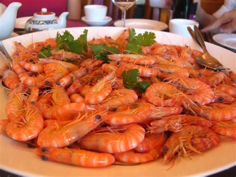 is shrimp bad for dogs human foods that are not for your dogs