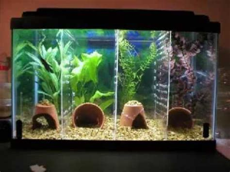 diy decorations pictures cool diy aquarium decor ideas