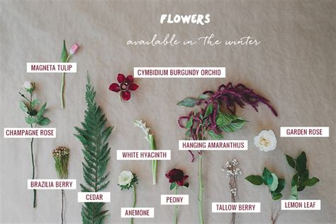 7 Types Of Flowers To For A Winter Wedding seasonal flower guide winter green wedding shoes