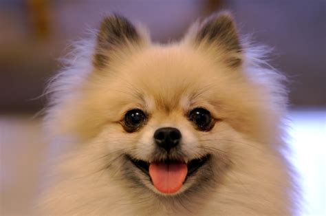 cutest breeds top 10 cutest looking breeds of all time omg top tens list