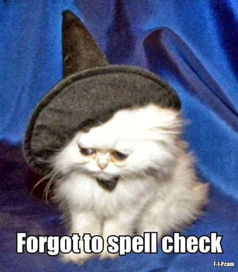 Halloween Cat Meme - 104 best funny halloween images on pinterest