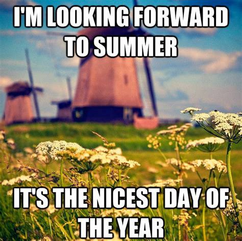 Funny Summer Memes - i m looking forward to summer dr heckle