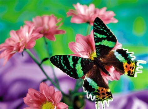 imagenes de mariposas bonitas y fondos de pantalla de las mejores fotos de mariposas bonitas imagenes de mariposas