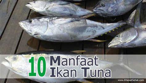 Minyak Ikan Dan Manfaatnya khasiat manfaat minyak ikan untuk kesehatan cara membaca