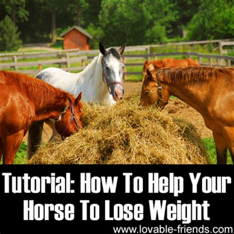 how to help your lose weight how to help your lose weight lovable friends
