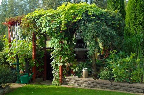 best climbing vines for pergolas lush climbing plants in a pergola in a beautiful garden stock photo colourbox