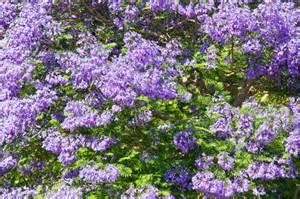 Shrubs With Flowers - perfumed plants burke s backyard