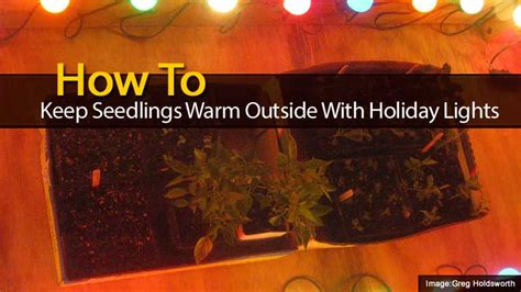 how to keep a warm outside how to keep seedlings warm outside with lights