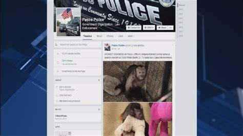 Pasco Warrant Search Seize Two Monkeys From Pasco Home Kepr
