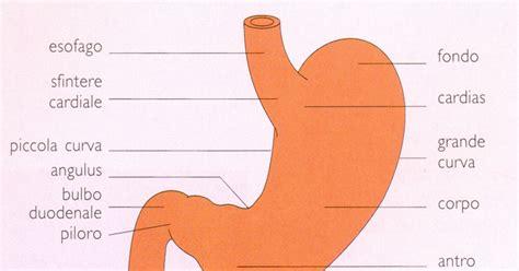 alimentazione gastrite acuta convivere con la gastrite cronica cos e la gastrite