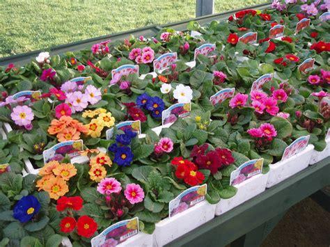 ben reid garden centre aberdeen spring bedding plants