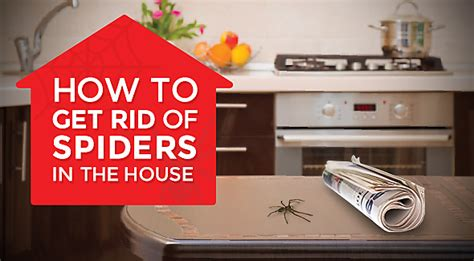 how to get rid of spiders in house how to get rid of spiders in the house