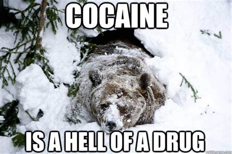 Cat Cocaine Meme - cocaine bear meme memes