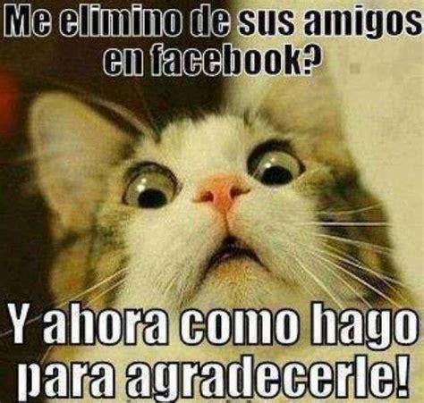 imagenes con frases groseras para facebook frases graciosas con imagenes para subir al facebook