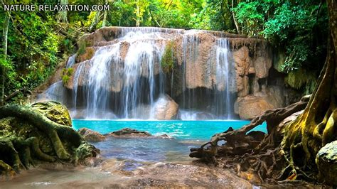 waterfall jungle sounds relaxing tropical rainforest nature sound