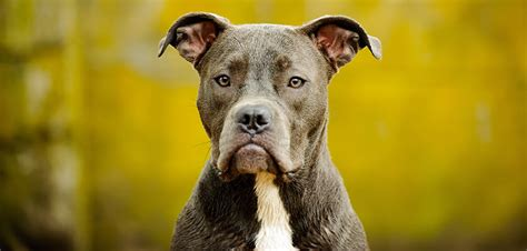 what happens if my dog bites someone in my house what are the legal ramifications if my dog bites someone 183 burke mead lawyers