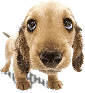 animated puppies dogs animated images gifs pictures animations 100 free