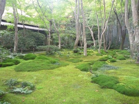 moss backyard backyard moss garden www imgkid com the image kid has it