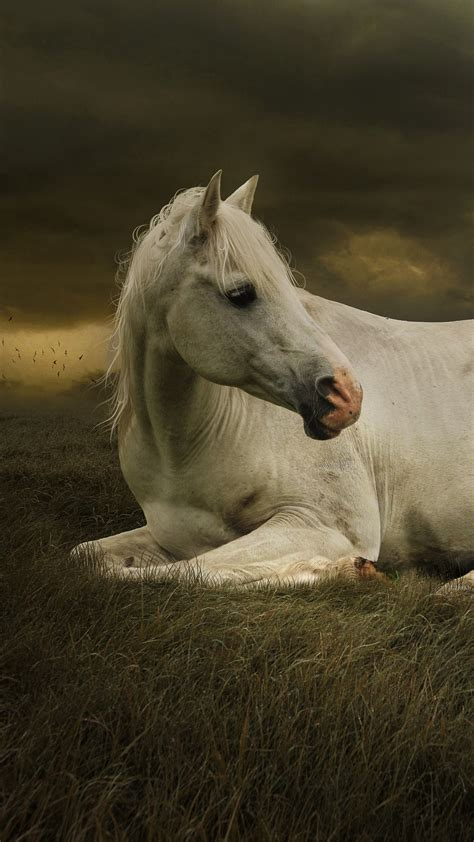 wallpaper white horse cute girl cute dog landscape