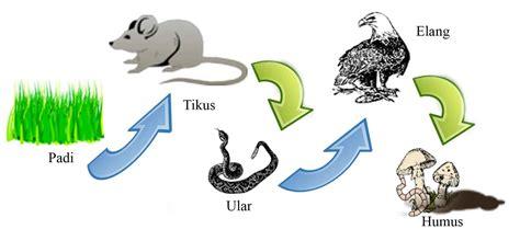 hubungan antar makhluk hidup dan simbiosis lainnya