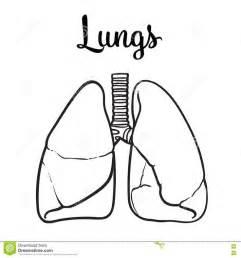 molde para hacer sistema respiratorio con foamy m 225 s de 25 ideas incre 237 bles sobre sistema respiratorio en