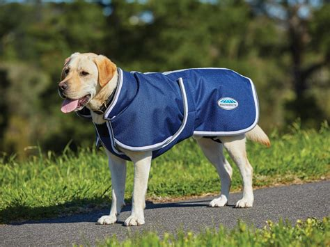 jackets for dogs top 10 winter coats for dogs