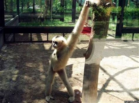 Sexy Monkey Meme - sexy monkey