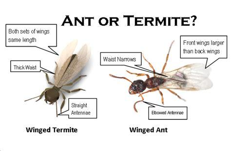 sentry termite pest control green pest management