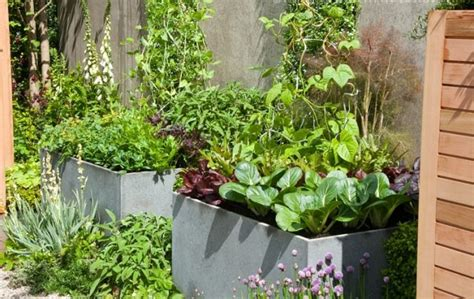 vegetable garden in pots how to make kitchen garden in pots container kitchen garden