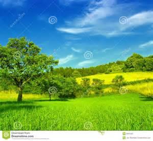 beautiful field stock photo image 9034420