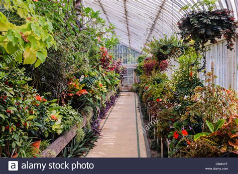 Garden House Botanic Gardens Inside The Palm House In Botanic Gardens Belfast Stock Photo Royalty Free Image 56991308 Alamy