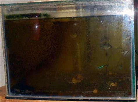 Pupuk Kalsium Tepung mari buat sendiri pupuk rumahan yang hemat ongkos