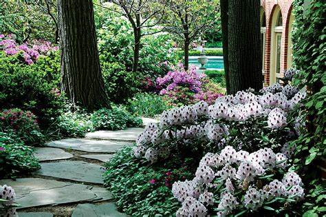 shade plants for gardening out of the sun