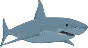 white shark cartoon free download clip art free clip art clipart library