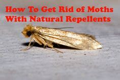 how to get rid of moths with repellents home
