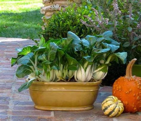 vegetables you can grow in pots fast growing vegetables for harvest can be grown in