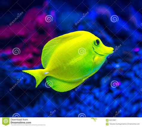 colorful saltwater fish colorful fish in aquarium stock photo image 60212867