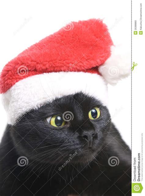 black cat santa cute christmas cat stock photo image