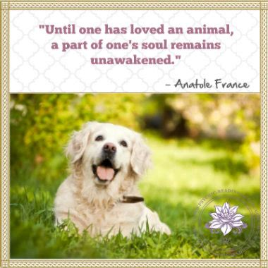 comforting quotes about death of a dog loss of pet quotes