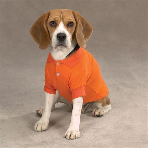 dogs and oranges casual canine basic polo shirt orange baxterboo