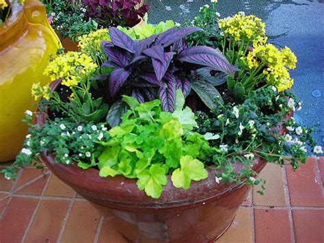 container gardens for florida 17 best images about florida landscaping ideas on