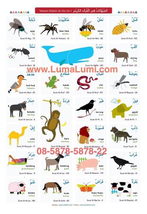 tutorial wudhu dalam bahasa inggris jual poster hewan dalam al qur an 3 bahasa dengan gambar