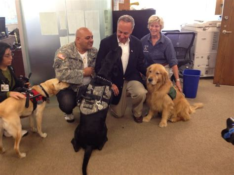 ptsd service cost new push to cover costs of ptsd service dogs for veterans kpbs